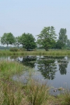 Op zoek naar wilde planten in Raamdal en langs Langven Camping Boltsebroek, Hoogeweg 19, Escharen