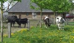 Foto's van Doe-boerderij An't Hoag