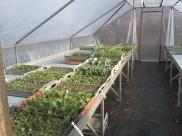 Volop groenteplanten te koop.