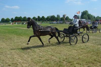 Evenement: 75e Land van Cuijkse Paardendagen Haps 9 en 10 juni 2018