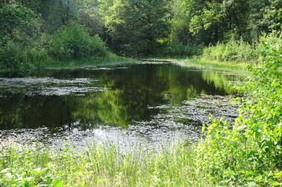 Evenement: Amfibieën in Broekse Wielen: zijn ze er nog, na twee droge jaren?